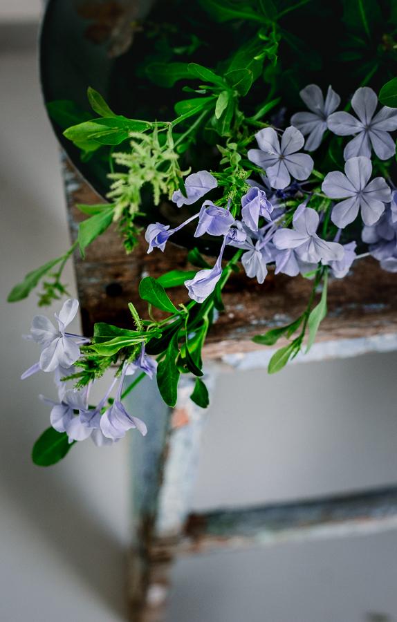 fiori stilllife