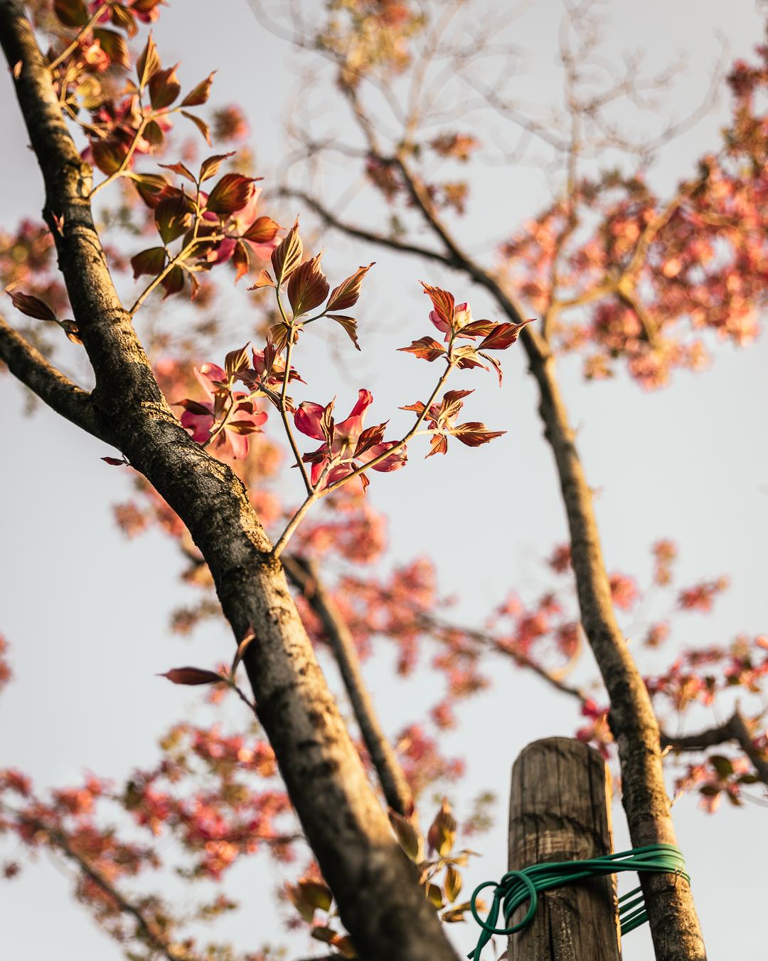 Alberi di Primavera L'Ultima Fetta
